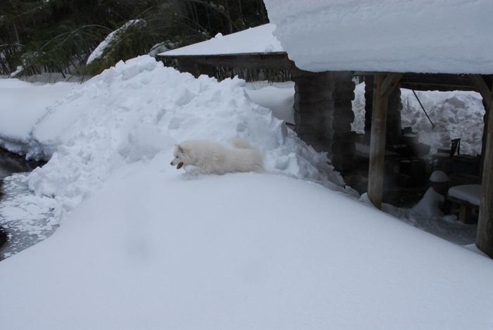 豪雪地方でランチ。_a0049296_20351175.jpg