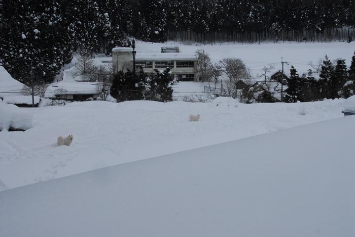 豪雪地方でランチ。_a0049296_20371098.jpg