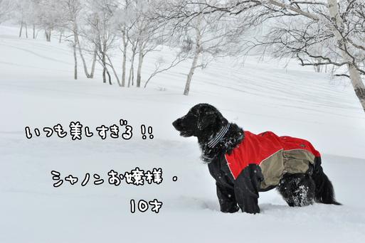 c0186528_1925313.jpg