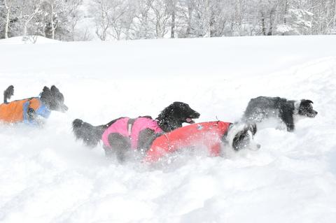 雪遊び 峰の原高原_f0098338_0105260.jpg