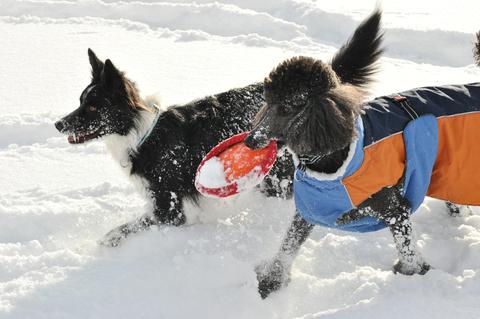 雪遊び 峰の原高原_f0098338_011226.jpg