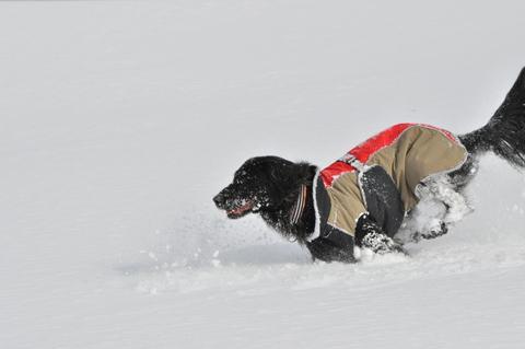 雪遊び 峰の原高原_f0098338_0155195.jpg
