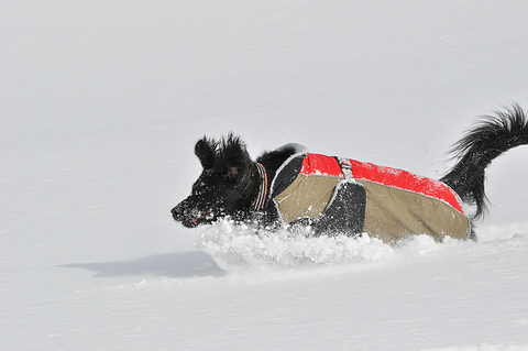 雪遊び 峰の原高原_f0098338_015929.jpg
