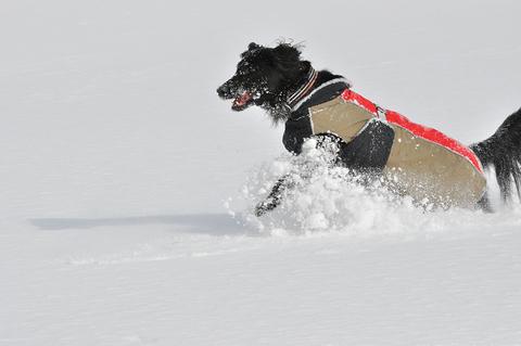 雪遊び 峰の原高原_f0098338_0161949.jpg