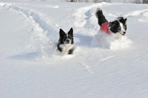 雪遊び 峰の原高原_f0098338_01756100.jpg