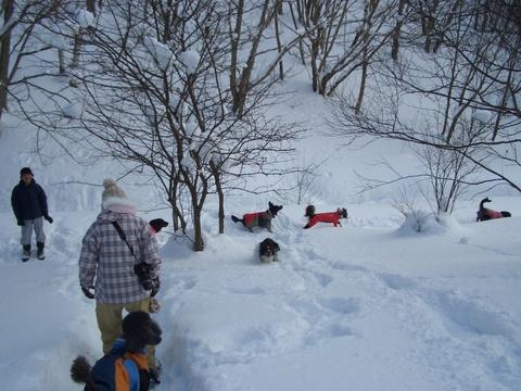 雪遊び 峰の原高原_f0098338_0402315.jpg