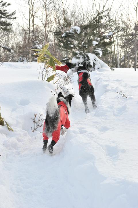 雪遊び 峰の原高原_f0098338_063454.jpg