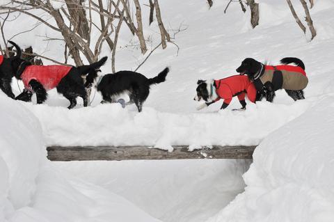 雪遊び 峰の原高原_f0098338_081239.jpg