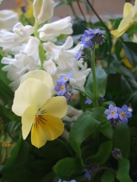 オークリーフ(グリーンアイスと春の草花のアレンジメント)_f0049672_10594227.jpg