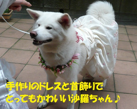 f0121712_15312.jpg
