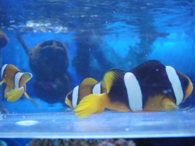 海水魚・サンゴ・水草・淡水魚_f0189122_13325896.jpg