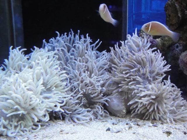 海水魚・サンゴ・水草・淡水魚_f0189122_13353751.jpg