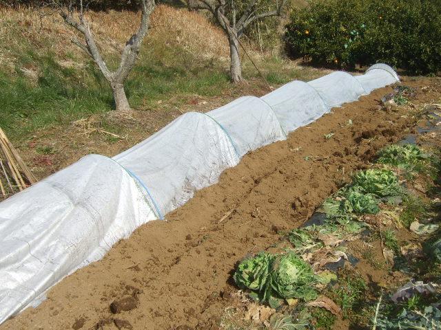 野菜畑に.....初雪....さむい~さむい_b0137932_1655032.jpg