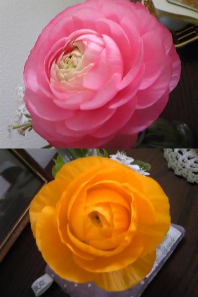 お花で気付いたこと_d0165645_22231381.jpg