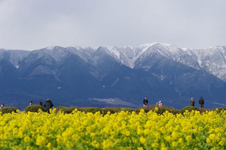 琵琶湖 なぎさ公園 ~春の予感?~_f0152550_22362258.jpg