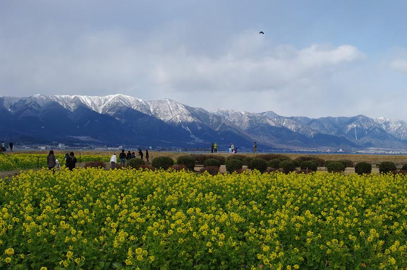 琵琶湖 なぎさ公園 ~春の予感?~_f0152550_2236733.jpg