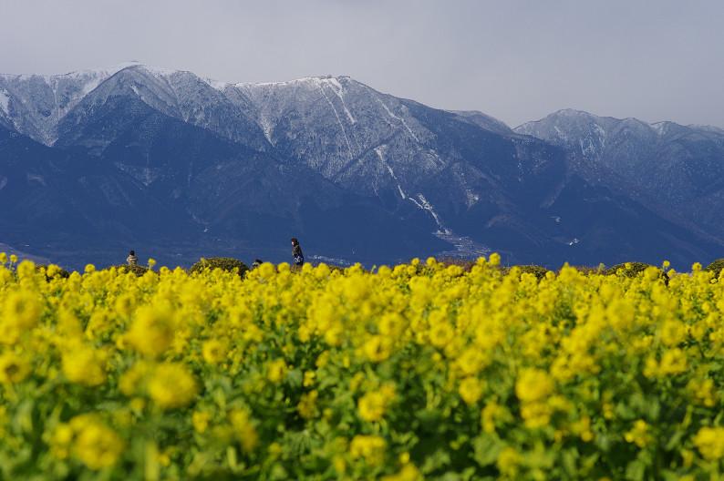 琵琶湖 なぎさ公園 ~春の予感?~_f0152550_2237194.jpg
