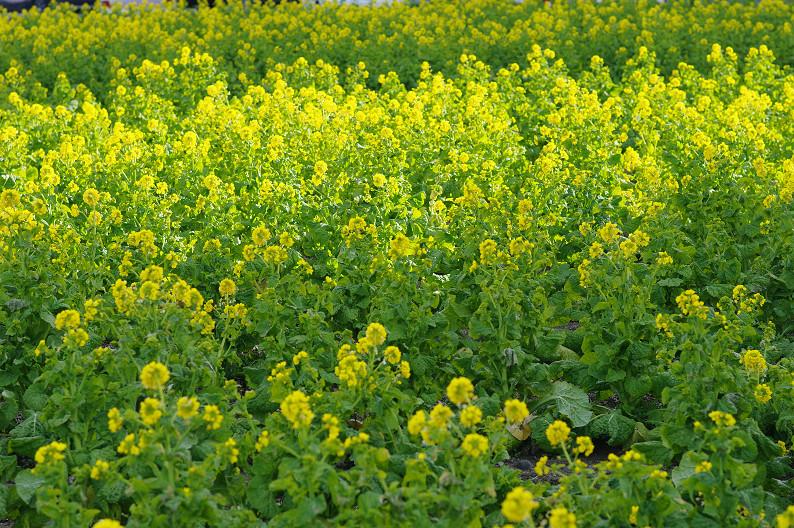 琵琶湖 なぎさ公園 ~春の予感?~_f0152550_22375560.jpg
