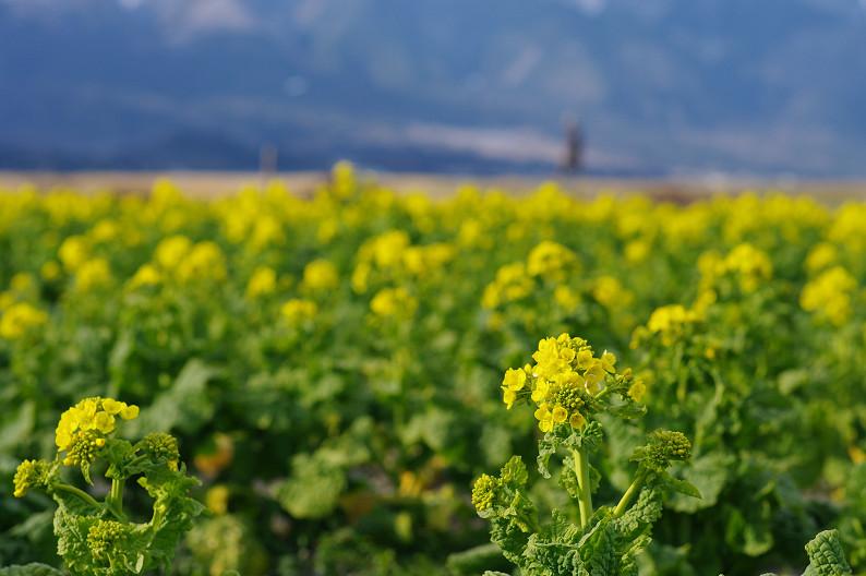 琵琶湖 なぎさ公園 ~春の予感?~_f0152550_2238182.jpg