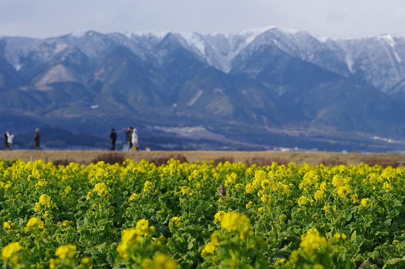 琵琶湖 なぎさ公園 ~春の予感?~_f0152550_22382376.jpg