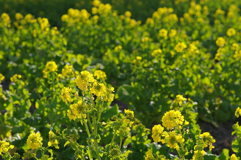 琵琶湖 なぎさ公園 ~春の予感?~_f0152550_2238242.jpg