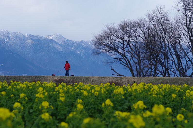 琵琶湖 なぎさ公園 ~春の予感?~_f0152550_22383065.jpg