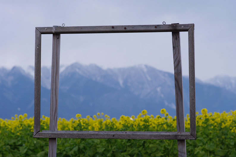 琵琶湖 なぎさ公園 ~春の予感?~_f0152550_22385668.jpg
