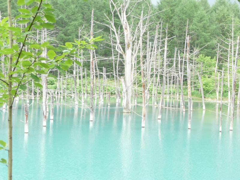 美瑛の碧い池 & 韓国の旅(板門店、他)_b0170651_13442935.jpg