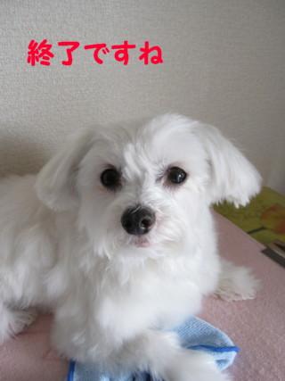 b0193480_123269.jpg