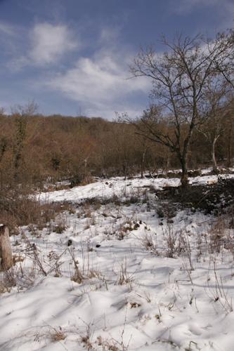 雪と鶏とカルボナーラ_f0106597_2327540.jpg