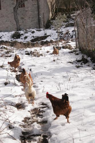 雪と鶏とカルボナーラ_f0106597_233634.jpg