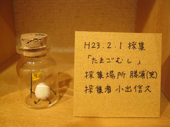 ☆15周年記念企画展「卵・TAMAGO・たまご」開催☆その3 _e0134502_19222712.jpg