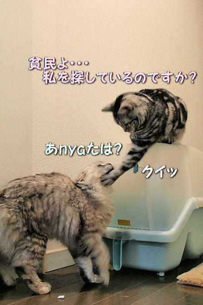 c0211109_4594857.jpg