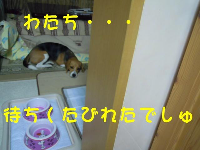c0166622_1954440.jpg