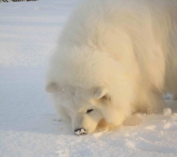 冬の琵琶湖_b0177436_15191688.jpg