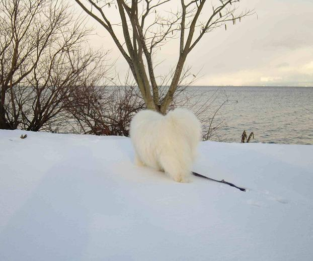 冬の琵琶湖_b0177436_15201217.jpg