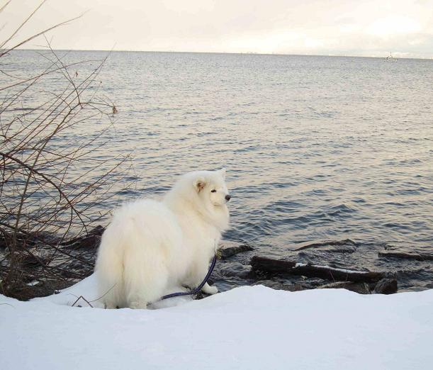 冬の琵琶湖_b0177436_15221743.jpg
