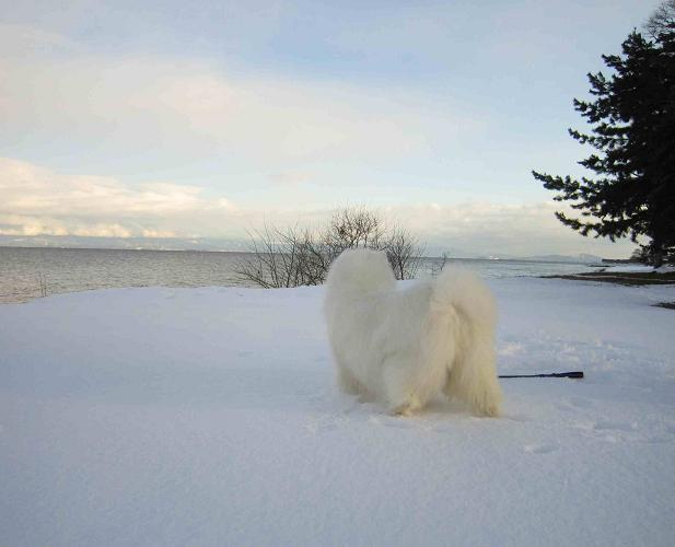 冬の琵琶湖_b0177436_15261993.jpg