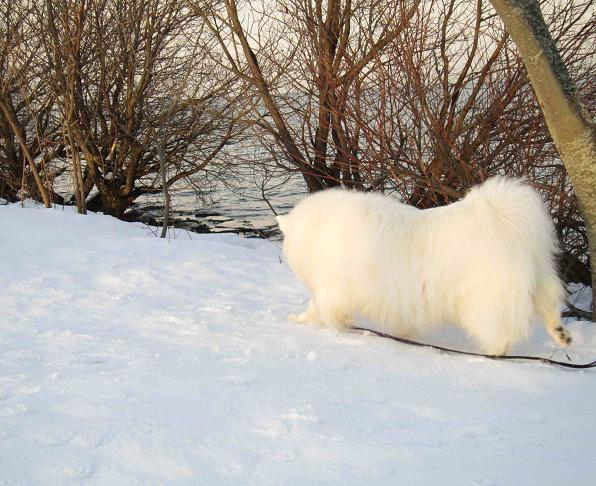 冬の琵琶湖_b0177436_1533195.jpg