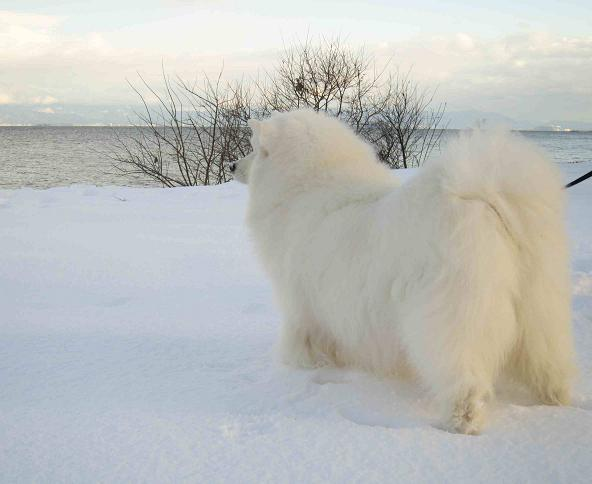 冬の琵琶湖_b0177436_15333212.jpg