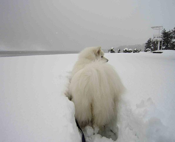 冬の琵琶湖_b0177436_15414290.jpg