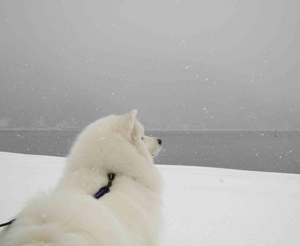 冬の琵琶湖_b0177436_154298.jpg