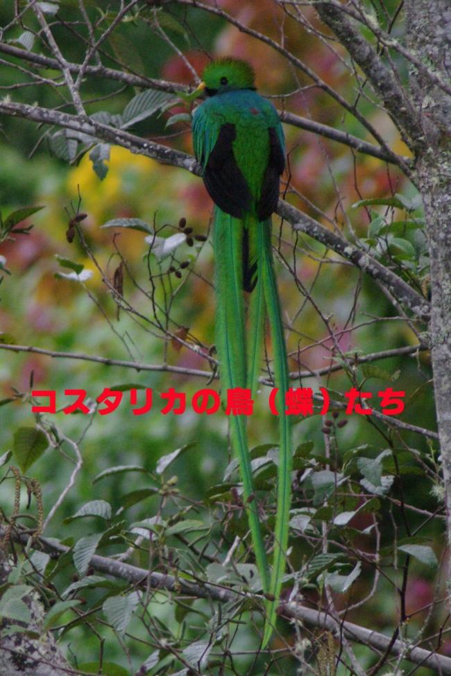 b0144049_1455186.jpg