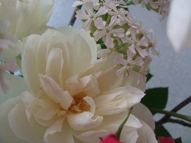 オークリーフ(マグノリアとイングリッシュローズの花束)_f0049672_1455882.jpg