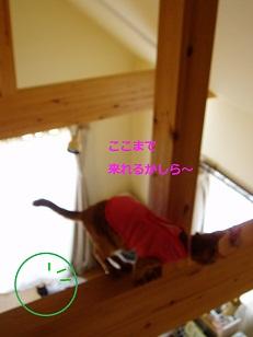 b0200310_11173970.jpg
