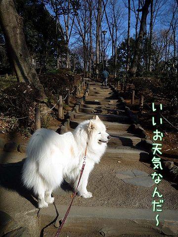 ぽかぽか散歩_c0062832_19274077.jpg
