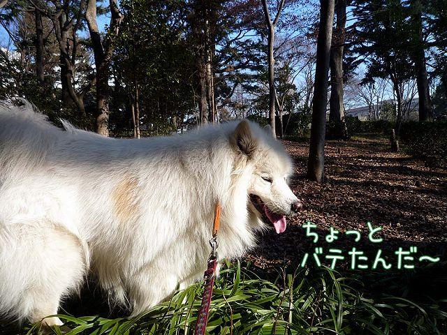 ぽかぽか散歩_c0062832_19275812.jpg