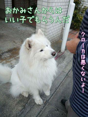 ぽかぽか散歩_c0062832_19281764.jpg