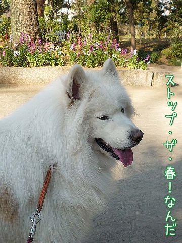 ぽかぽか散歩_c0062832_1928233.jpg