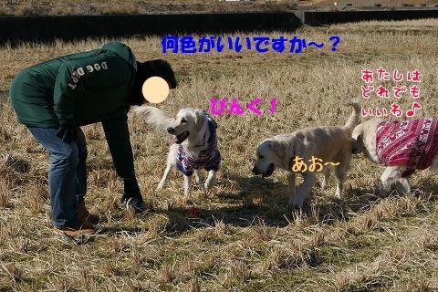 c0214455_1627752.jpg